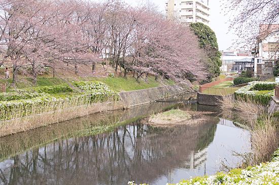 桜シーズン-5