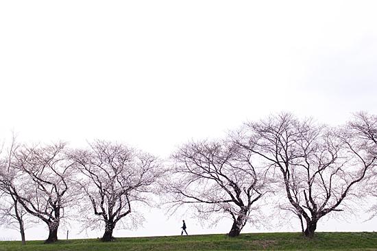 桜めぐり3-10