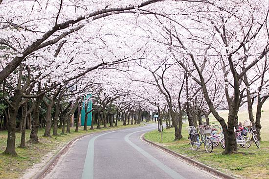 桜めぐり3-12
