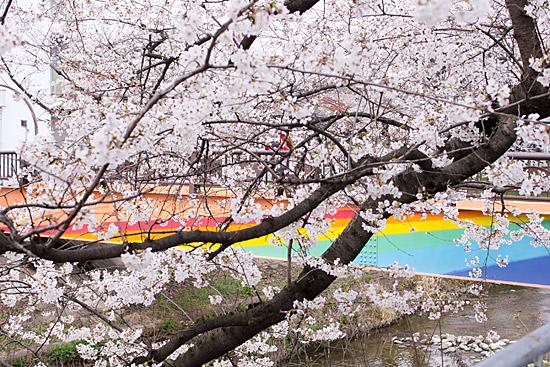 桜めぐり3-4