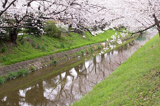 桜めぐり3-5