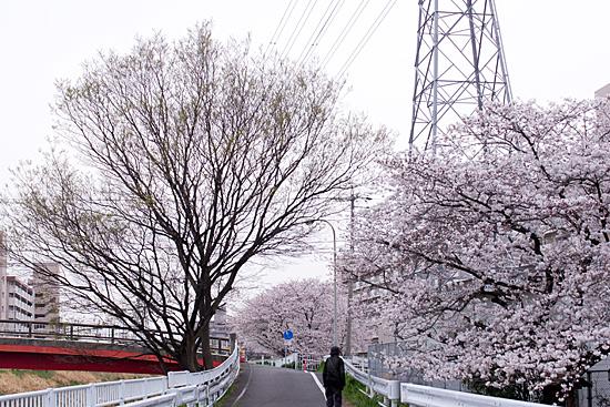 桜めぐり3-9