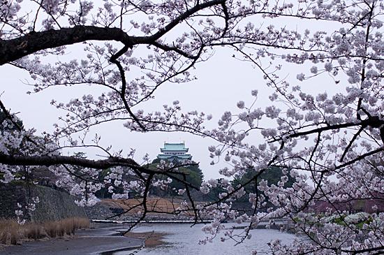 桜めぐり4-3