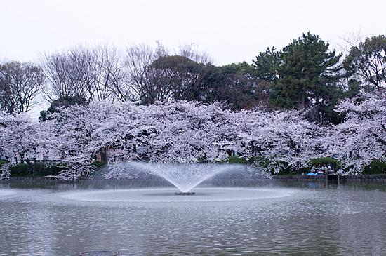桜めぐり4-5