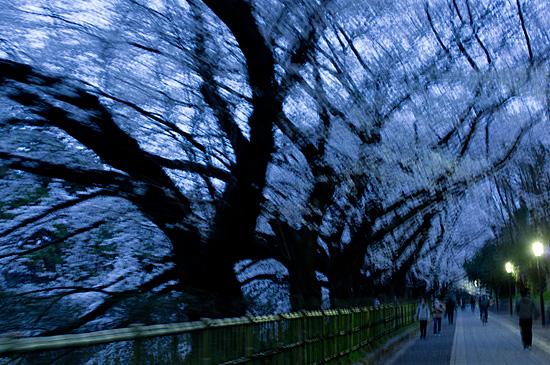 桜めぐり4-9