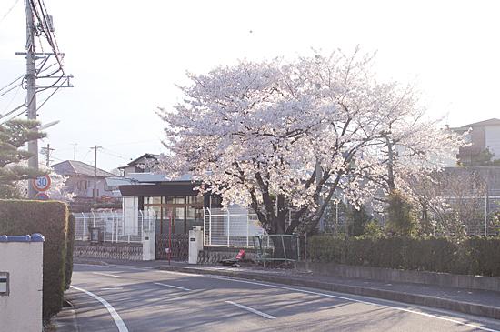 桜の思い出-12