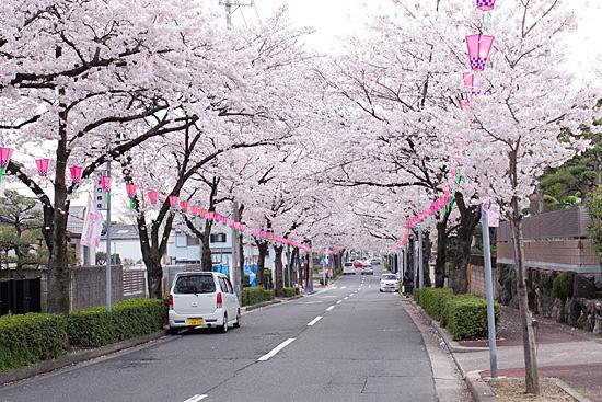 桜の思い出-2