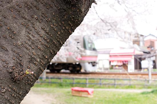 桜の思い出-9