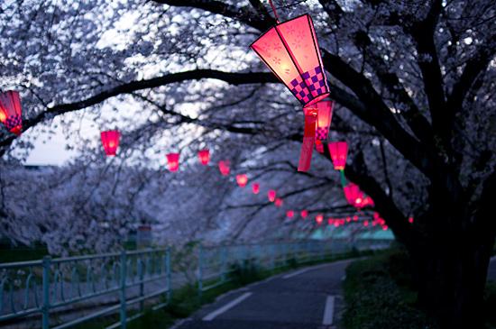 香流川桜-11