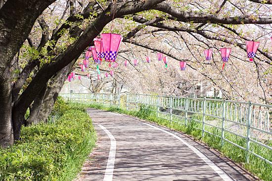香流川桜-12