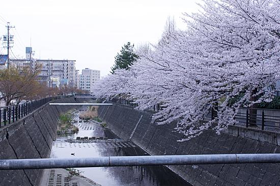 桜思い出2-10