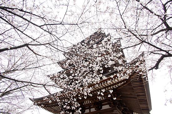 桜思い出2-3
