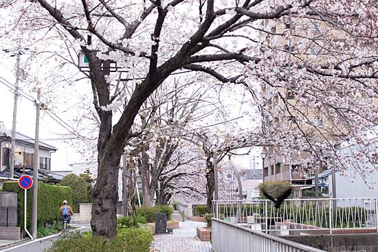 桜思い出2-5