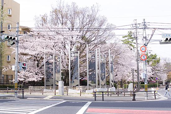 桜思い出2-6