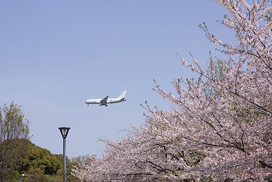 桜思い出2-8