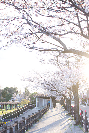 桜思い出2-9