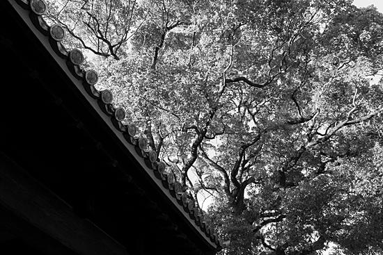 徳川園-11