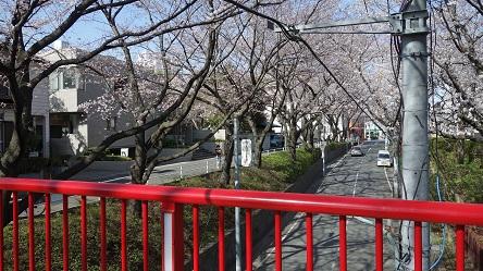 桜 田園調布