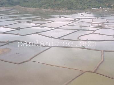 スンバワ島海老養殖池2