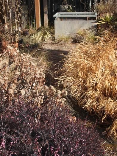 my-garden 086