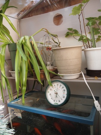 my-garden 019