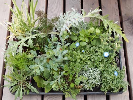 my-garden 035 (3)