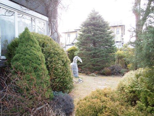 my-garden 078 (2)