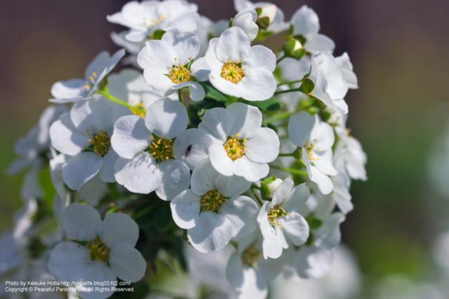 マクロレンズで撮った花
