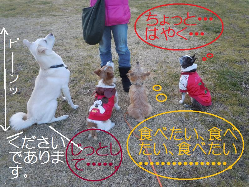 DSCN0212_convert_20110131130031.jpg