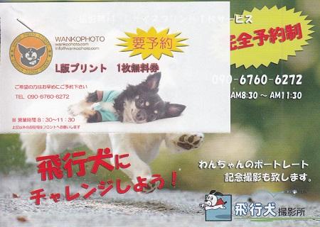 わんパラ飛行犬1