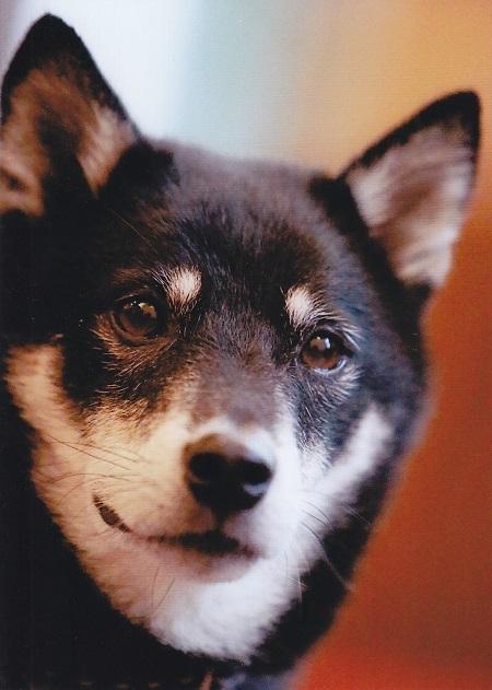 わんパラ飛行犬16