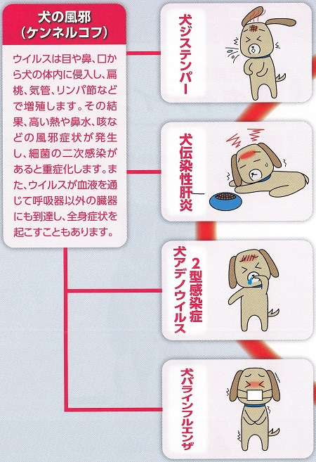 11種混合ワクチン13