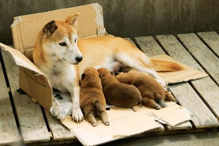 ひまわりと子犬の7日間5