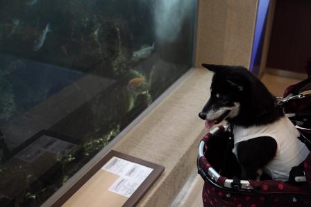 京都大学白浜水族館11
