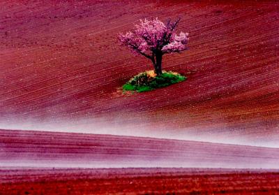 写真「春の陽炎」