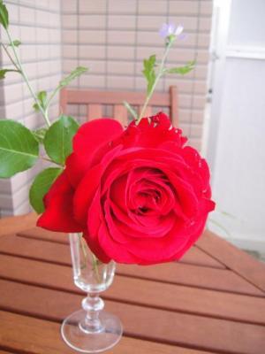 001_convert_20100528100123.jpg