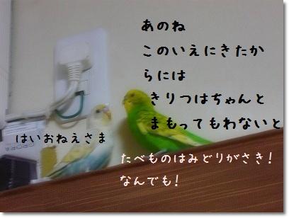 s-P1020008.jpg