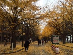 hokudai2014_5.jpg