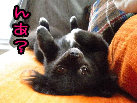 arisihinomaru_20110710104933.jpg