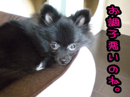 chousigawaruimar.jpg