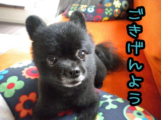 gokigenyou823.jpg