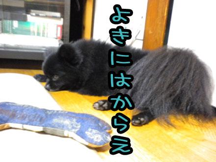 hibinotannrenn_20101024020220.jpg