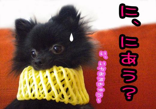 ichimarukyu.jpg