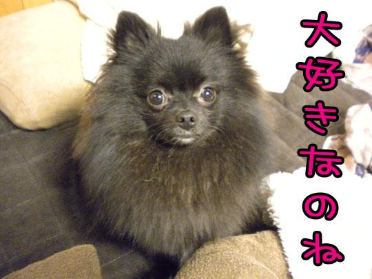 kabochadaisuki.jpg