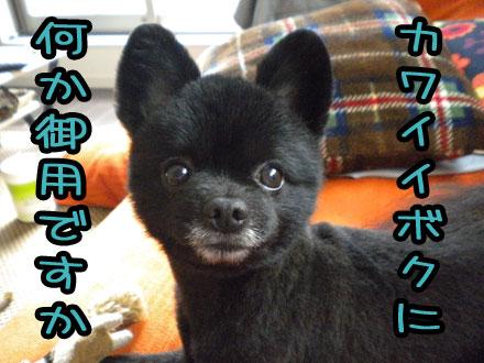 kawaiibokuninanika.jpg