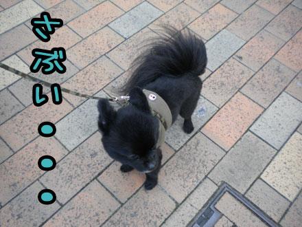 koyukichiratukusanpo.jpg