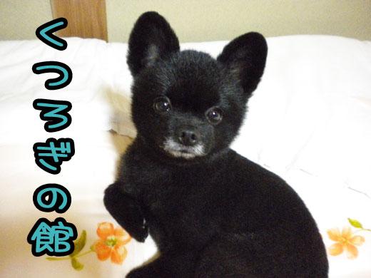 kuturoginoyakata_20101228132217.jpg