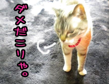 leochannodamedakoraya.jpg