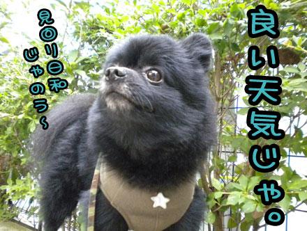 mimawaribiyori.jpg