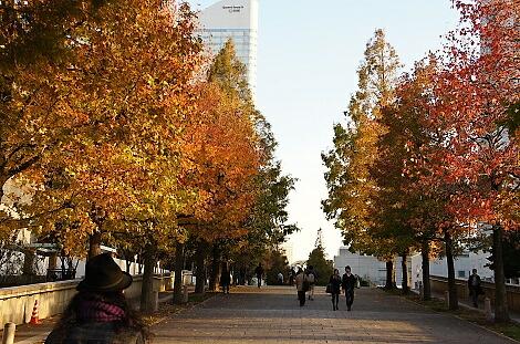 晩秋の横浜201201